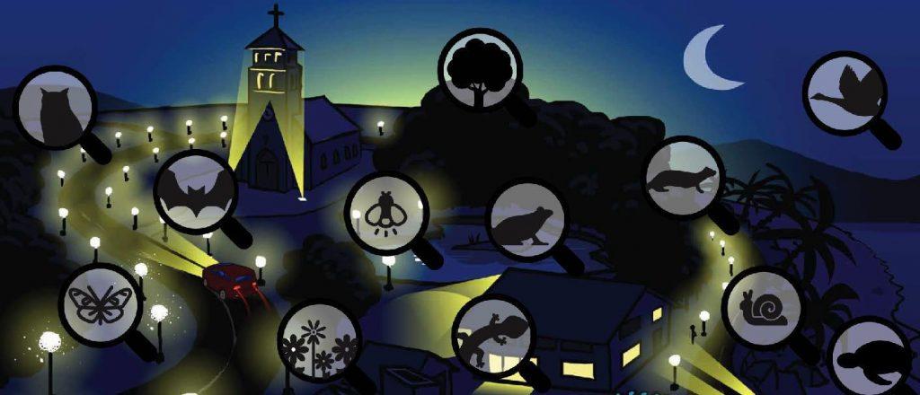 Schéma représentant les différentes plantes et animaux touchés par la pollution nocturne.