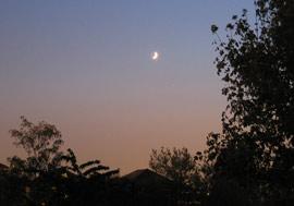 Photo du croissant de lune et de Jupiter dans le ciel du crépuscule, avec un avant-plan de feuillage