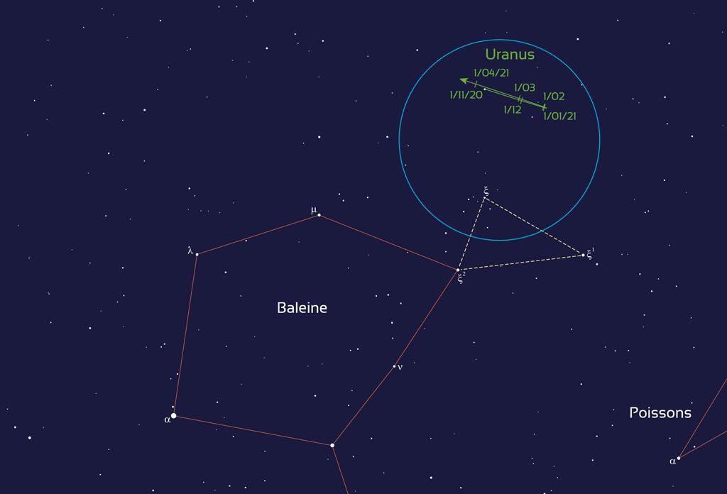 Localisation de la planète Uranus entre novembre 2020 et avril 2021. Le cercle bleu de 6 degrés représente le champ d'une paire de jumelles. La planète se repère à partir de la tête de la Baleine.