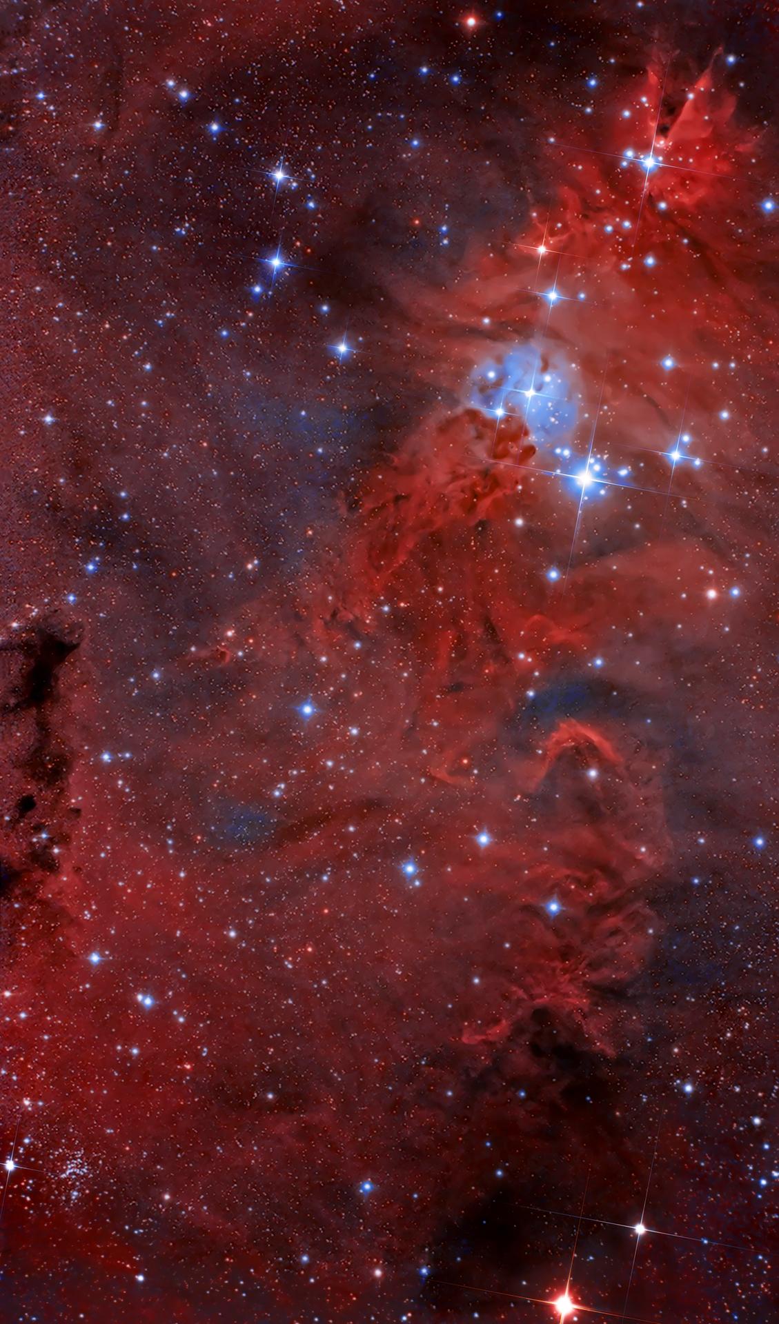 NGC 2264 : Spéciale Noël ! :)