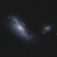 "Galaxy Group ARP269 (""Cocoon Galaxy"" NGC4490 & NGC4485)"